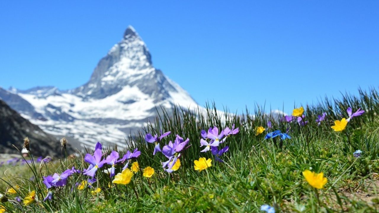 Fiori Da Giardino In Montagna quali piante per il giardino in montagna?