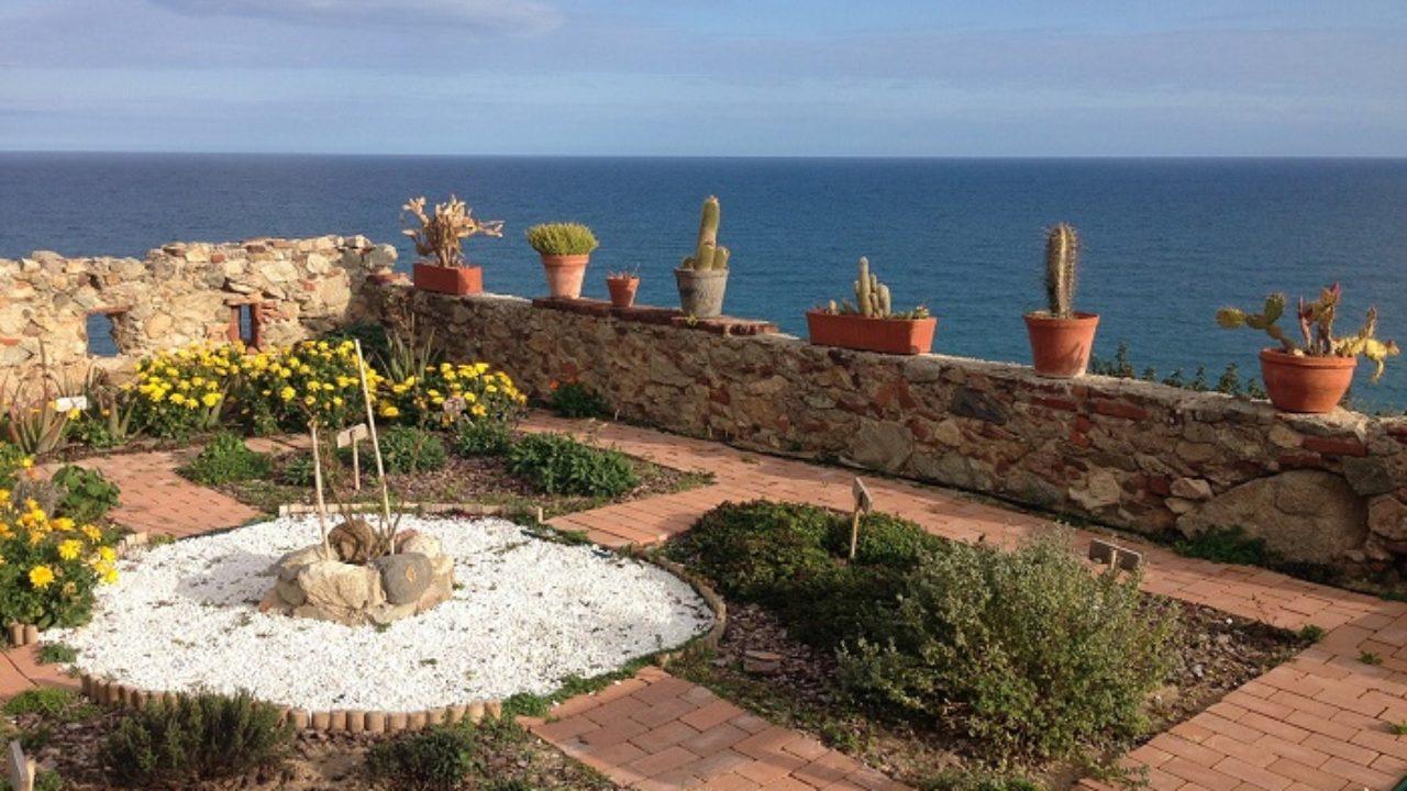 Alberelli Ornamentali Da Giardino le piante adatte per il giardino al mare