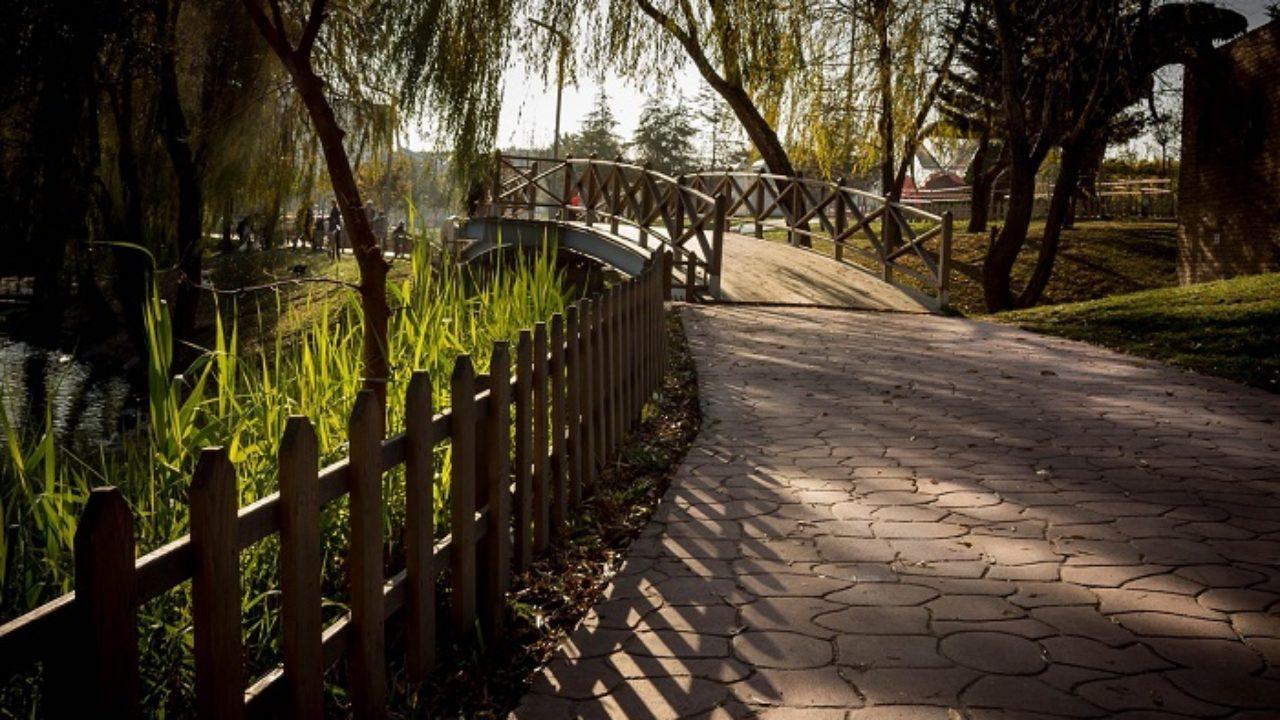 Piante Da Giardino Ombroso come scegliere le piante per le zone in ombra?