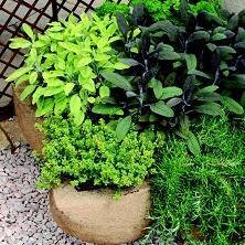 Orto-in-vaso-in-autunno-piante-aromatiche