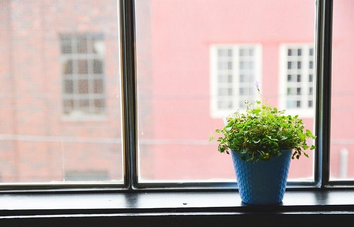 coltivare le piante in casa