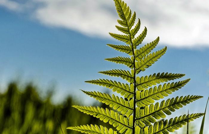 le piante filtrano l'aria da inquinanti indoor