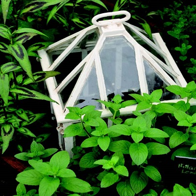Come-proteggere-le-piante-dal-gelo