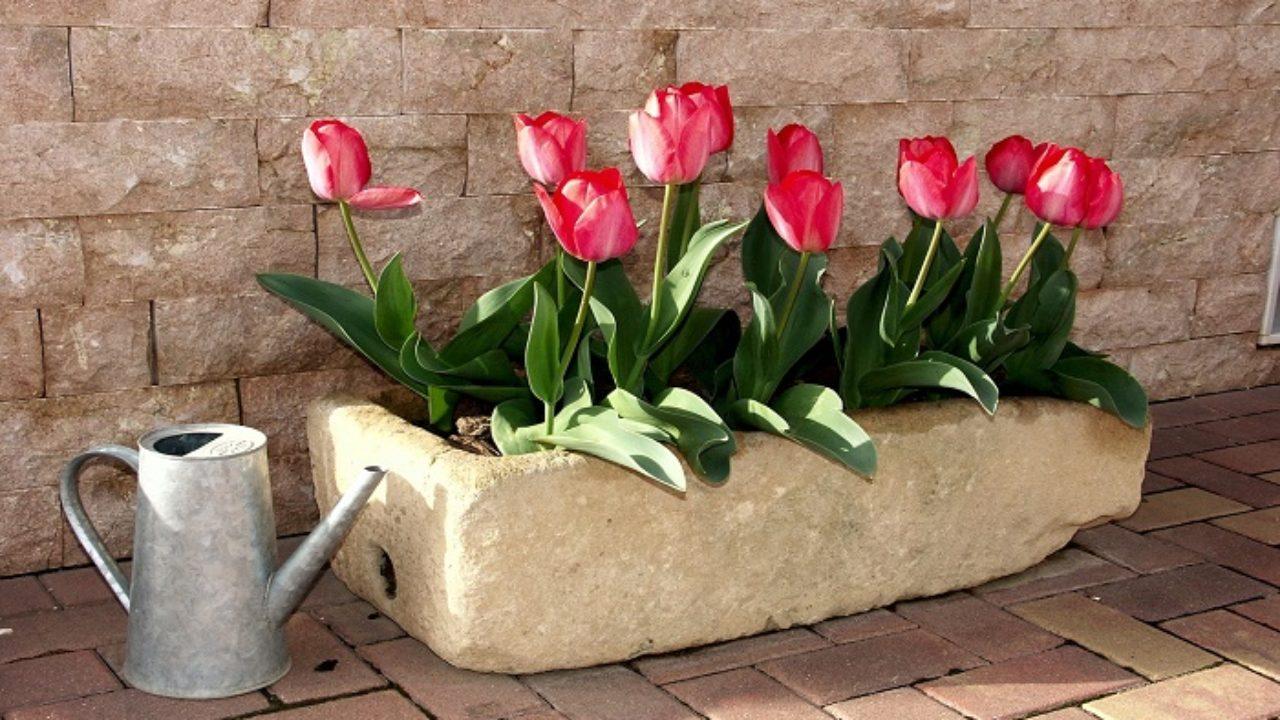 Bagnare Piante Con Bottiglie irrigare le piante in vaso in modo corretto: 10 consigli utili