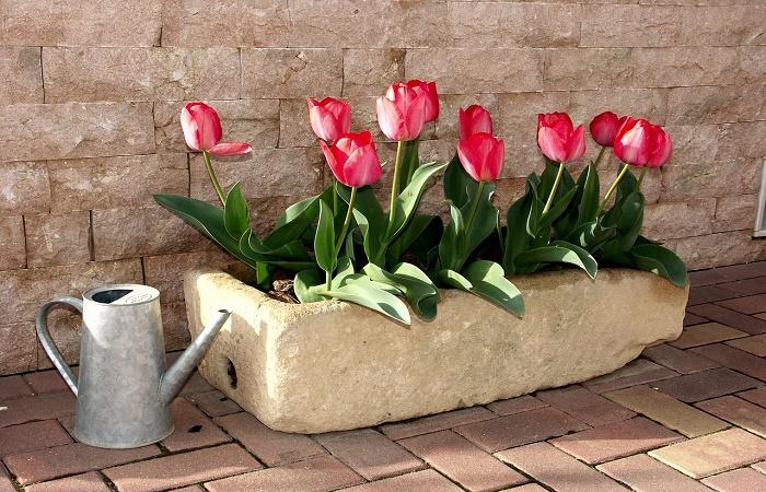 irrigare le piante in vaso