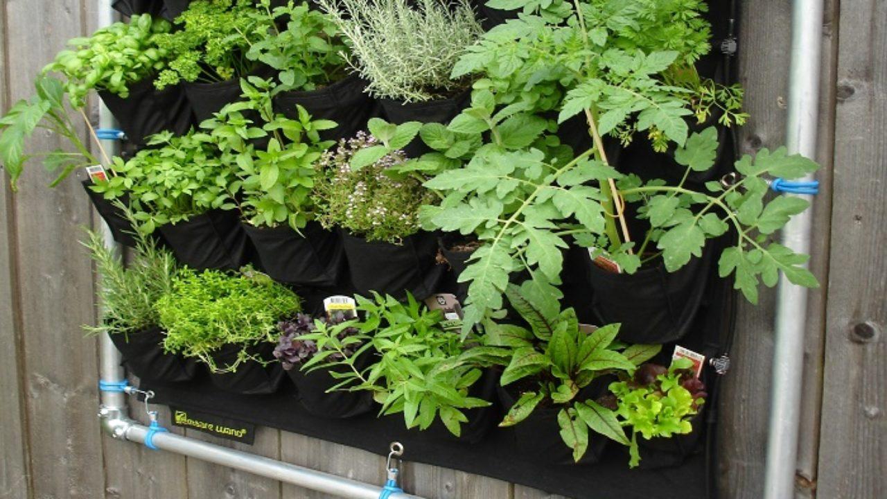 Coltivare In Casa Piante Aromatiche come coltivare le aromatiche in vaso