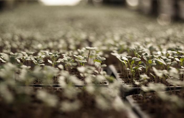 seminare un orto