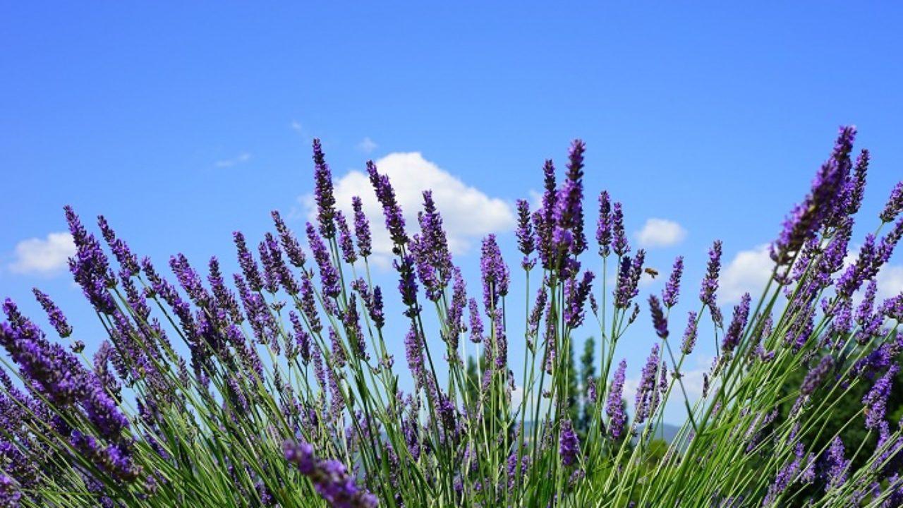 Coltivare In Casa Piante Aromatiche coltivare le piante aromatiche in giardino: sono belle anche
