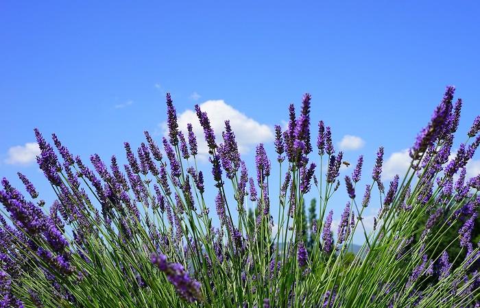 coltivare le piante aromatiche