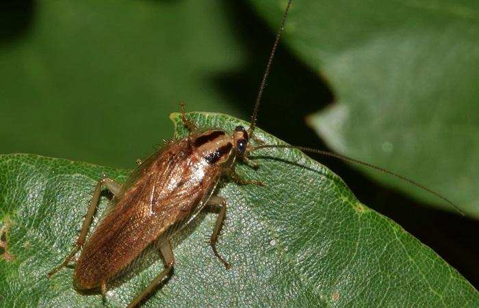 eliminare gli scarafaggi dalla casa