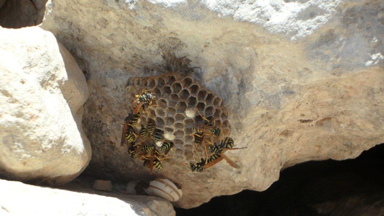 Insetti Bianchi Sul Parquet come eliminare le vespe da casa: attenzione ai nidi