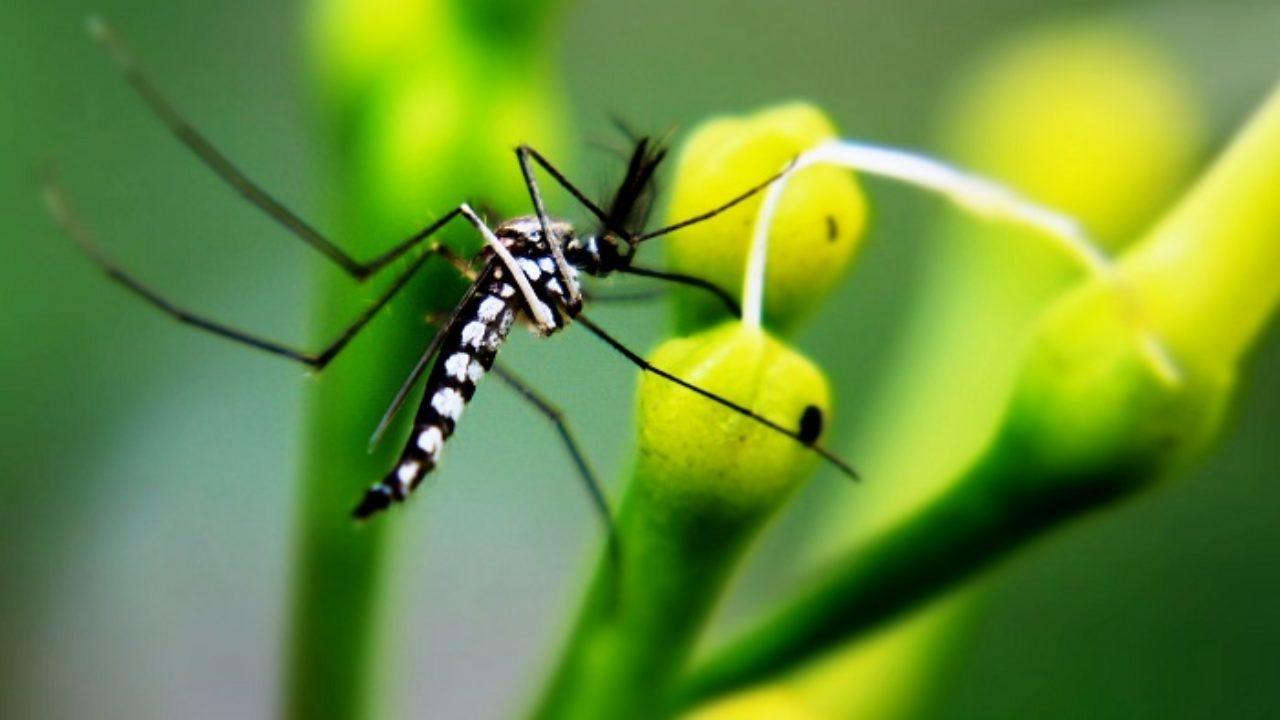 Troppe Mosche In Giardino come combattere le invasioni di zanzare in giardino