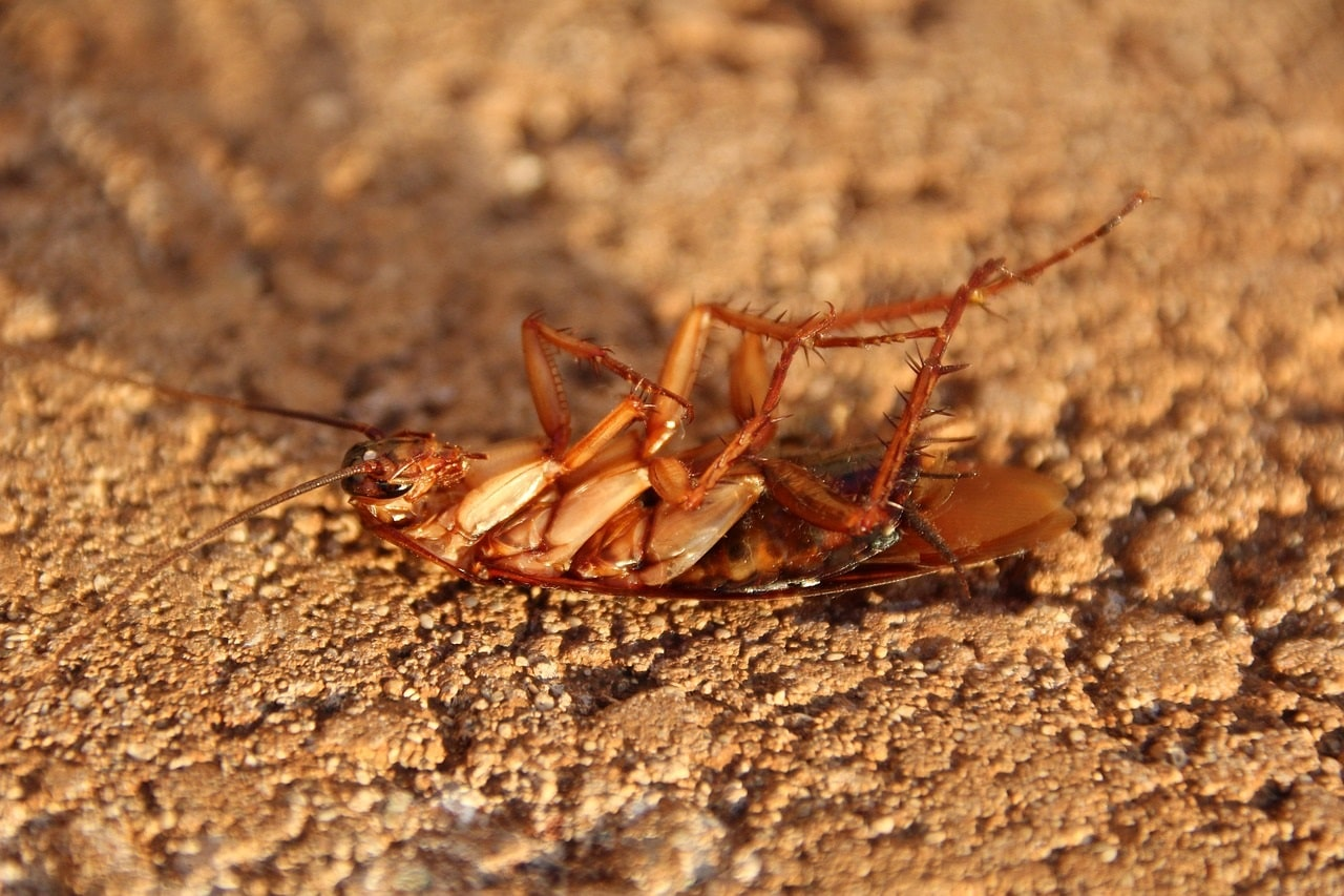 trappola scarafaggi