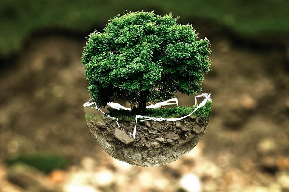 usare le piante contro l'inquinamento