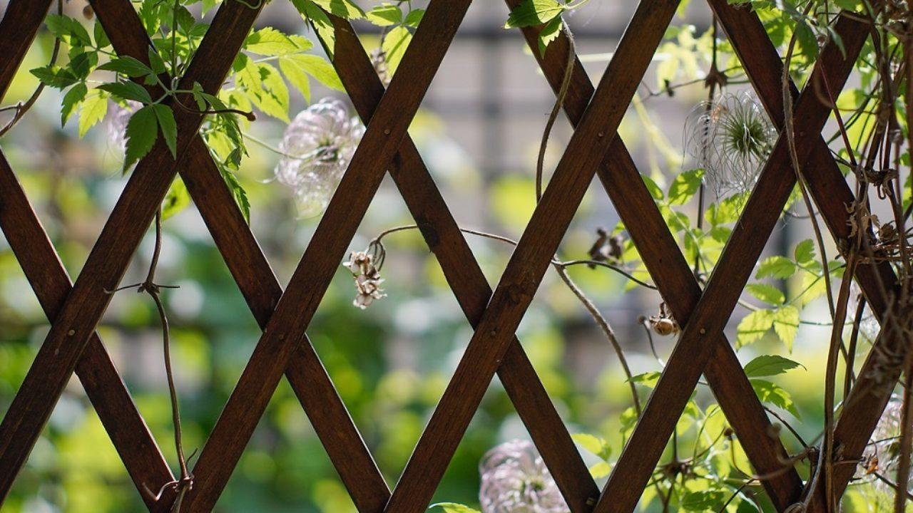 Clematis Resistenti Al Freddo come scegliere le piante rampicanti adatte per un clima