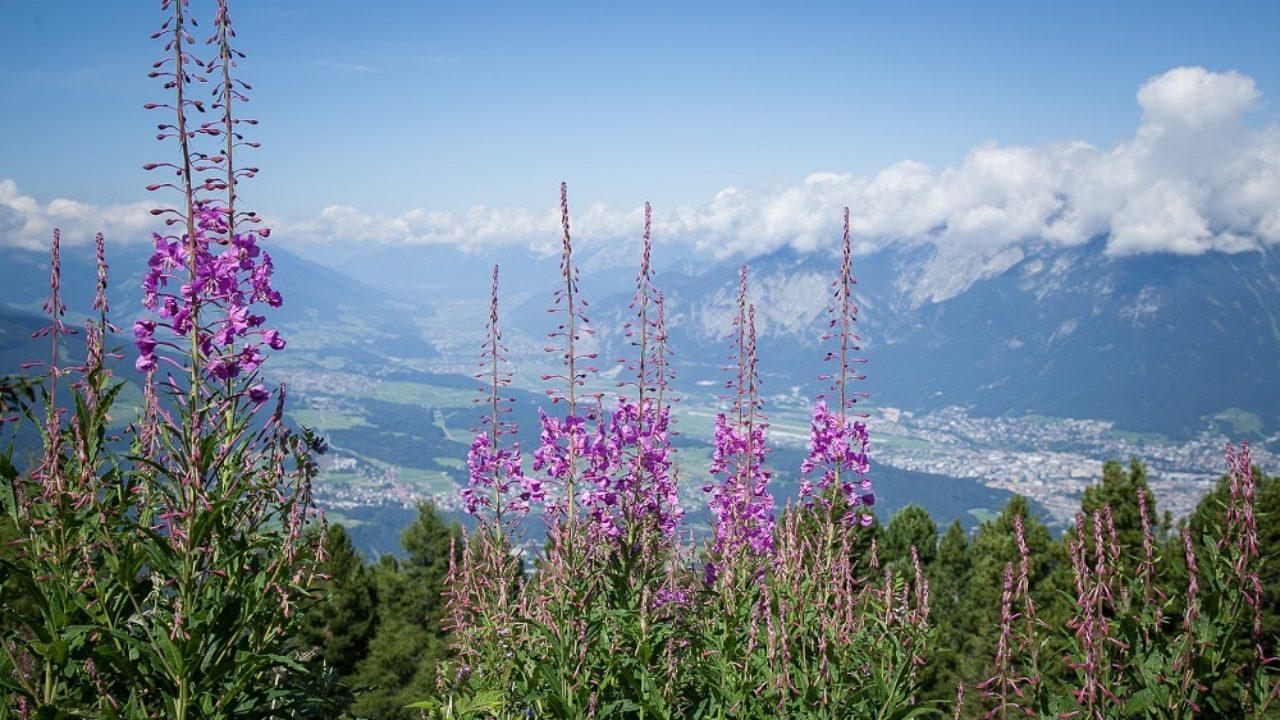 Fiori Da Giardino In Montagna cosa coltivare in montagna? le piante adatte anche con il