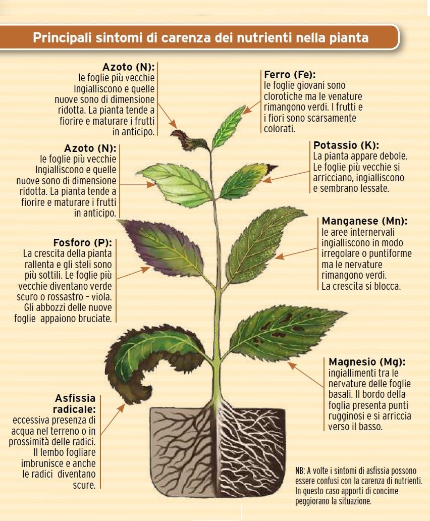 giardinaggio biologico