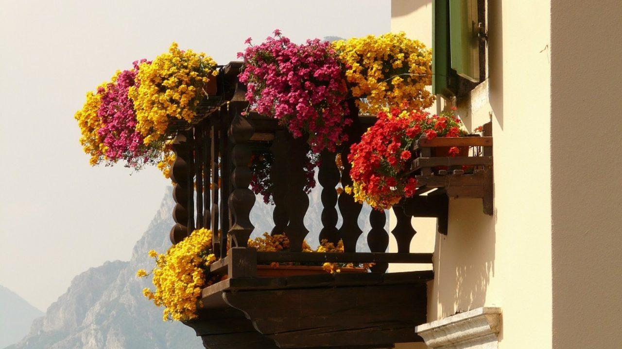 Piante Adatte Al Sole Diretto le piante con fioriture abbondanti adatte per il terrazzo