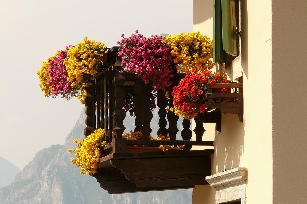piante con fioriture abbondanti