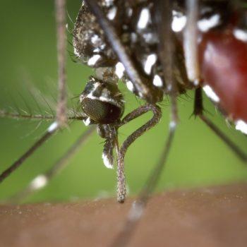 Problema Delle Zanzare