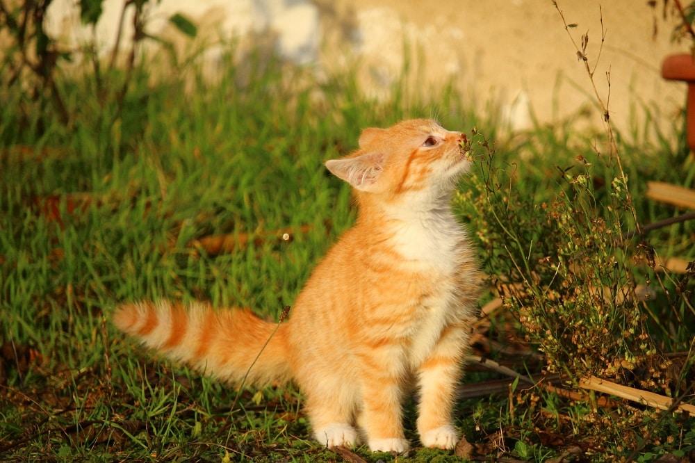 piante velenose e tossiche per i cani e i gatti