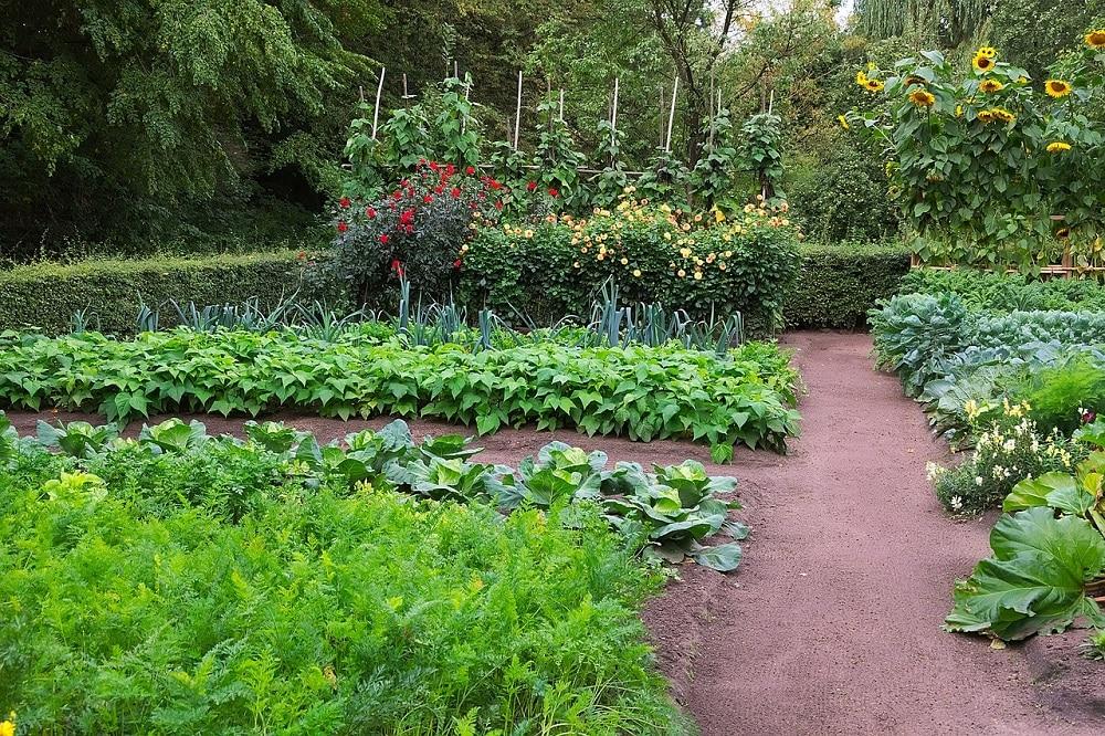 Come realizzare un orto naturale e biologico