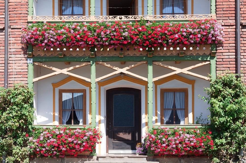 piante per un terrazzo fiorito