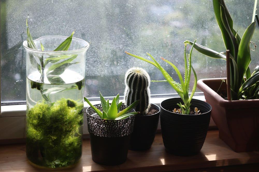 irrigare le piante quando siamo in vacanza