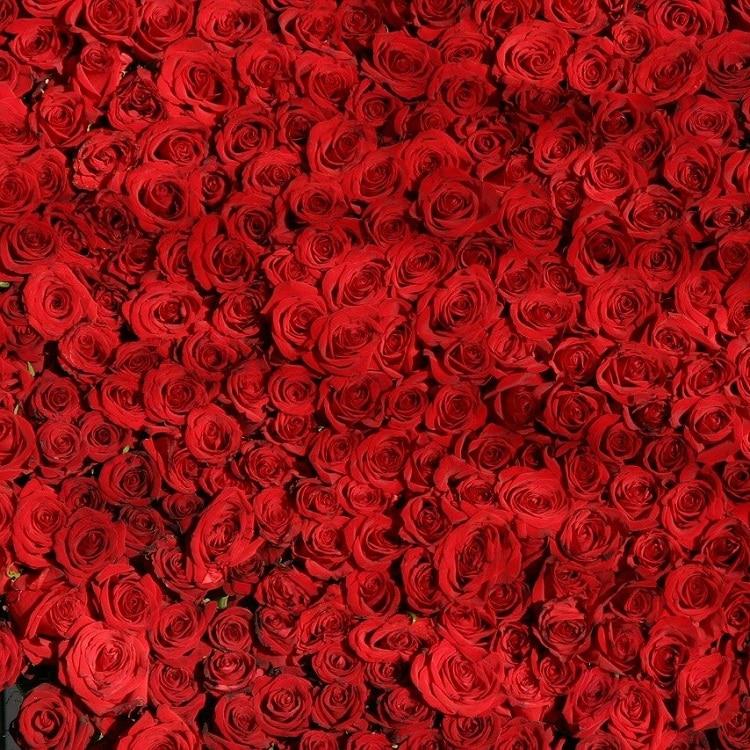 Giardino Colorato Di Rosso - Rosa
