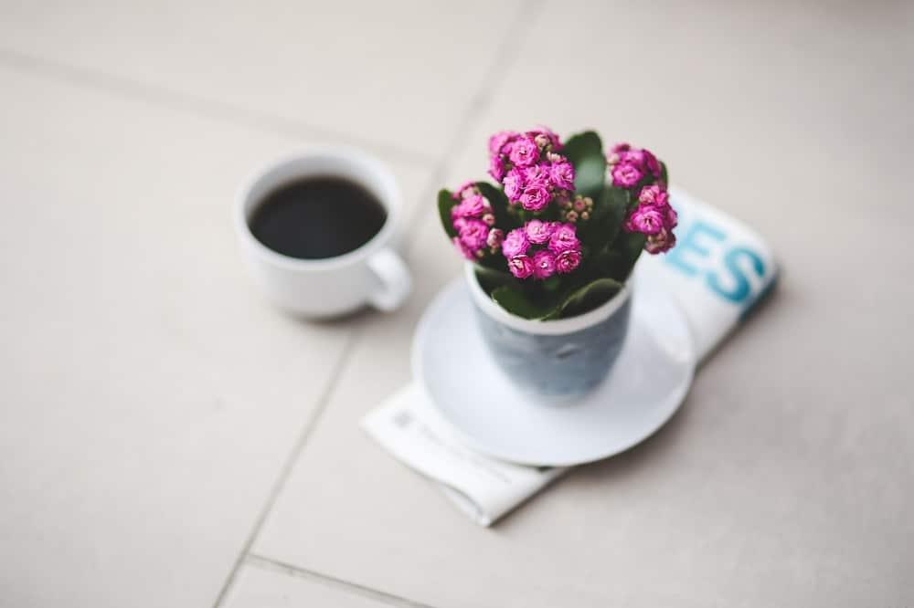 Piante adatte ai piccoli vasi