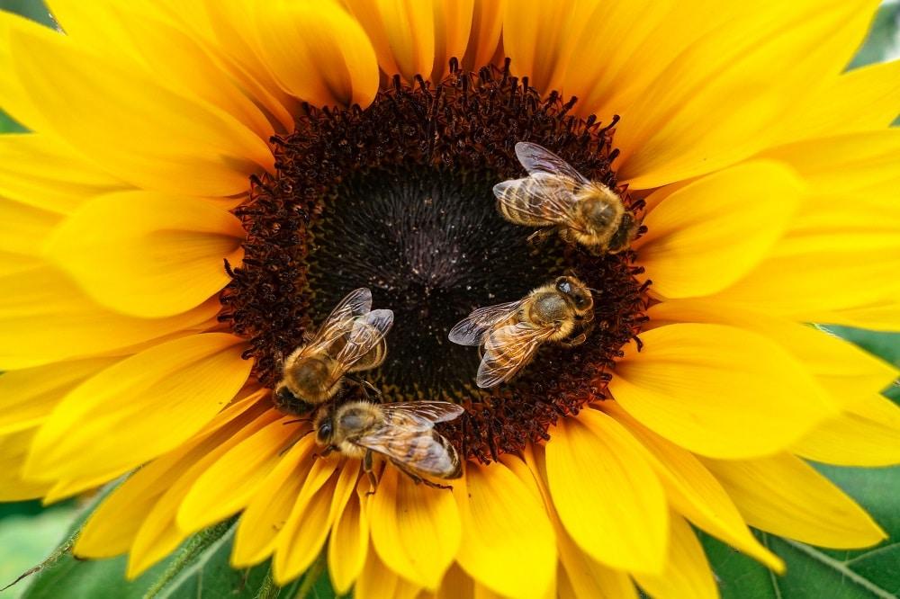 Piante che attirano le api e le farfalle